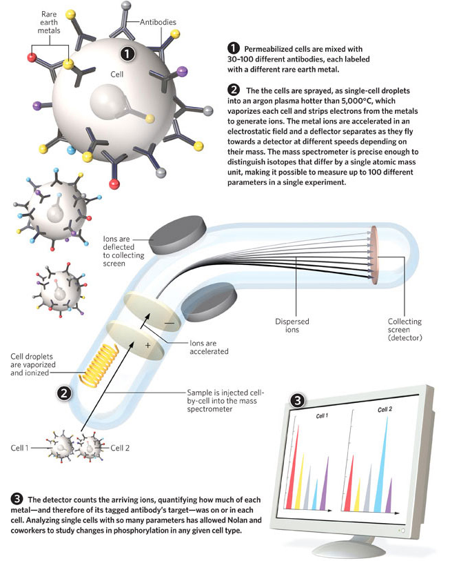 Flow_Cytometry_for_the_Masses___The_Scientist_Magazine®